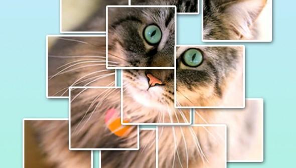 katten blokken